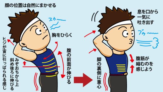 逆腹筋の解説